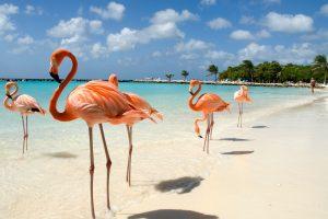 que hacer y visitar en aruba